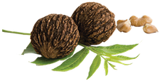 Black Walnut Toastmasters logo