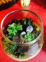 First Friday Conversations: Make your own Terrarium