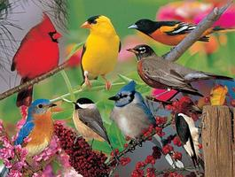 Habitat Series Part III: Birds in Your Backyard...