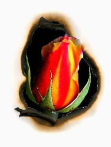 ROSA PHOENIX ART STUDIO logo