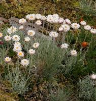 Vale of Belvoir Threatened Flora Weekend