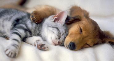 AmazingPets! Puppy and Kitten Adoption Drive