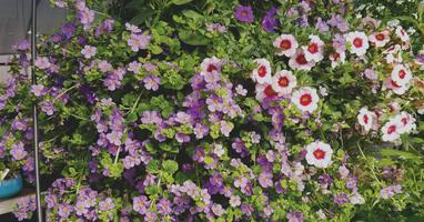 Fabulous Flowers from Spring to Fall - Container...