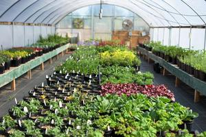 Gardener's Gathering: Greenhouse Brunch Buffet