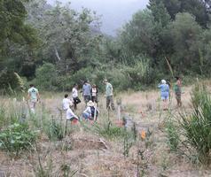 Lower Topanga State Park Habitat Restoration