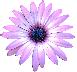 Purple Daisy Mental Health Training logo