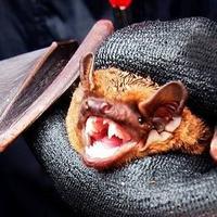 Bat Walk @ Merrions Wood