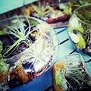 Air Plant Terrarium Workshop by The Floral Loft