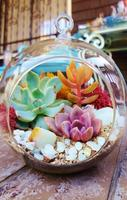 DIY Terrarium Workshop