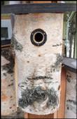 Workshop: Making Birch Birdhouses