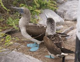 Halifax - Ecuador & Galapagos Islands - free travel...