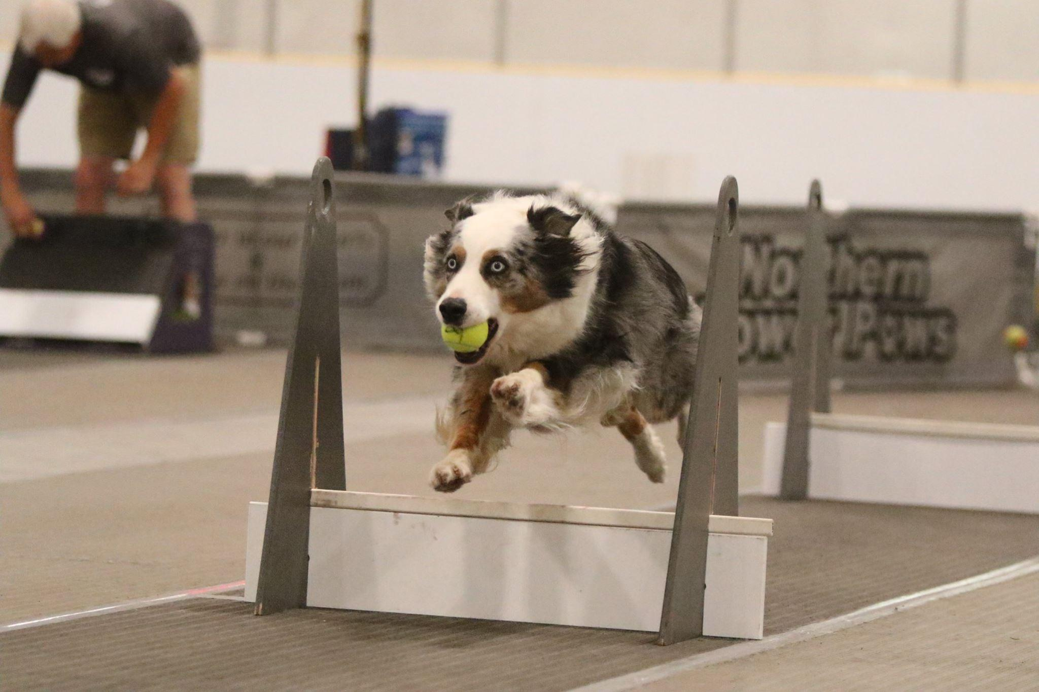 Training Class - Flyball