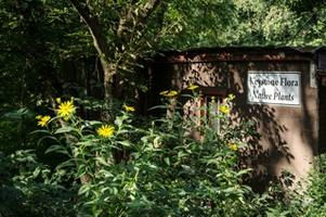 First Friday Conversation: Native Plants in our Garden