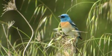 Spring Migration and Natural History of San Luis Obispo...