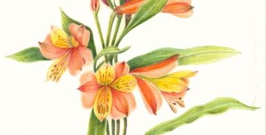 Early Spring Flowers in Colored Pencil