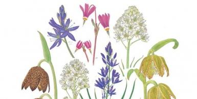 Painting Wildflowers: From Field to Studio