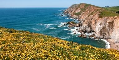 Whales and Wildflowers at Chimney Rock