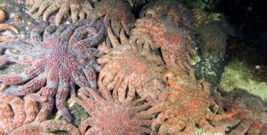 Wonders of the Intertidal