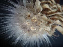 THE ART OF NATURE: Plant Walk & Microscopic...