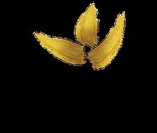 Wealth For Life logo