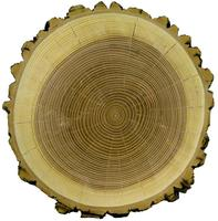 Tree Ring Discovey Class