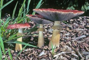 INTENSIVE: Mushroom Garden Pathways