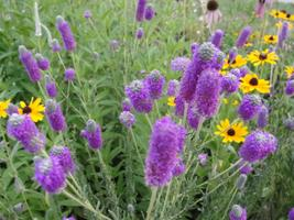 Adding Native Plants to the Landscape (Simply...