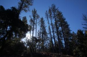 Discover the Santa Cruz Sandhills—a Biodiversity...
