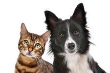 Sarge's Animal Rescue Foundation logo