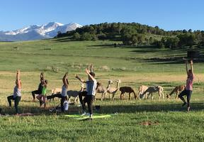 """Join us this Sunday for """"Alpaca Yoga"""" come, relax and..."""