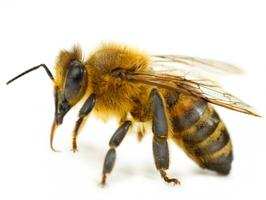 Encouraging Pollinators, Beneficial Insects, and Other Good...