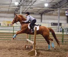Utah 4-H Horse Judging Clinic