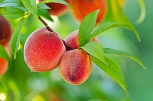 Les clés pour un produit alimentaire bio de qualité et...