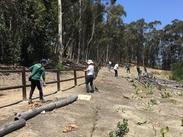 North County Cares: Village H North Trail CleanUp