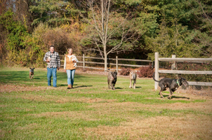 The First Annual Concert for the Animals: A Pop Music Songbook Benefiting Gray Face Acres Senior Dog Rescue & Retreat in Haymarket, VA