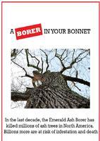 Emerald Ash Borer - Private Land Owner Information...