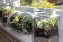 Quirkshop: Tiny Terrariums