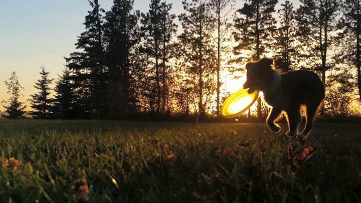 Training Class - Career Canines