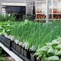 Herbs in Containers (Thursday March 20, 3:00pm)