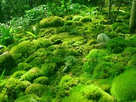 Moss in the Landscape