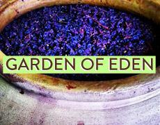 Garden of Eden at Fall from Grace (sold out)