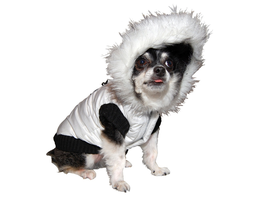 Celebrate Fashion's Night Out with Furry Friends on...
