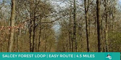 SALCEY FOREST | THURSDAY NORTHANTS EVENING WALK | 4.5...