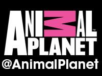 Animal Planet presents Cats Live Here Party at SXSW...