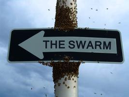 Invasive Vine SWARM #2