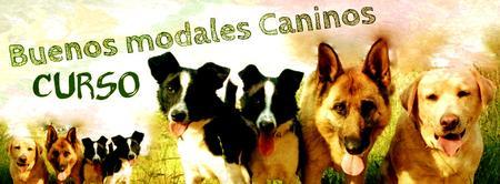 CURSO de Buenos Modales Caninos BARCELONA