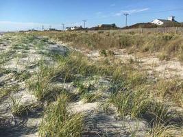 Beach Plum Planting – Volunteer Work Session with...