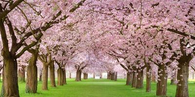 Apple Blossom Festival 2020.Cherry Blossom Tour With Lunch Washington Dc April 2020