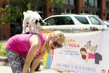 Happy Goat Yoga energized by It's For Charity! Events  logo