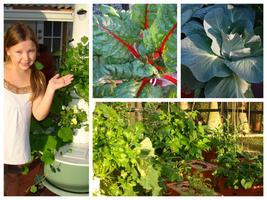 Central FL Urban Gardening- Twilight